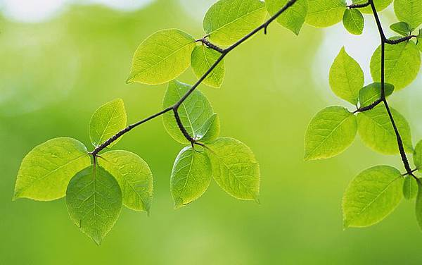 nature-green-leaves-01.jpg