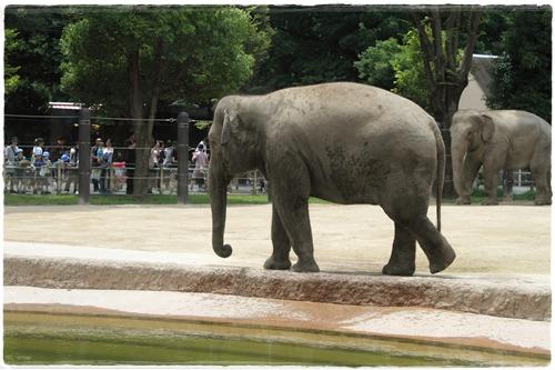 上野動物園 (20)