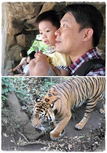 上野動物園 (38)