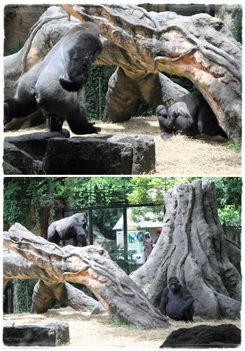 上野動物園 (39)