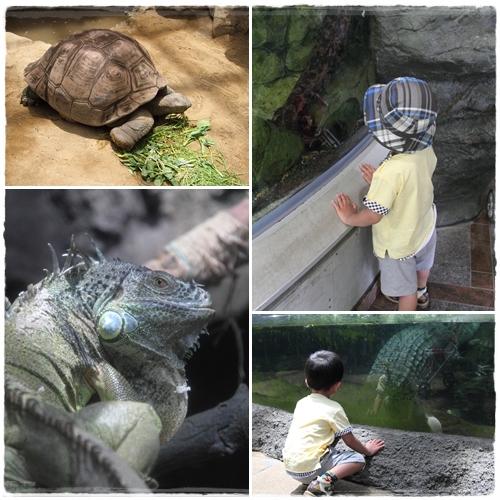 上野動物園 (41)