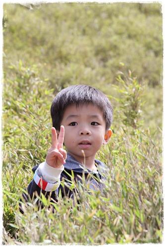合歡山賞杜鵑 (9)