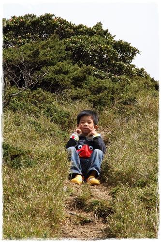 合歡山賞杜鵑 (21)