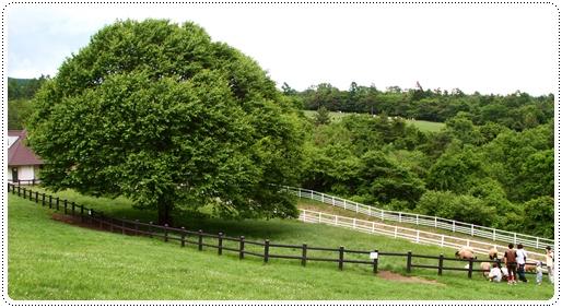 牧場公園 (9)