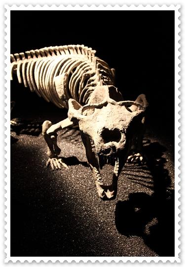 地球最古老的恐龍展 (5)