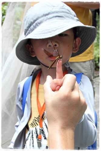 昆蟲夏令營 (23)