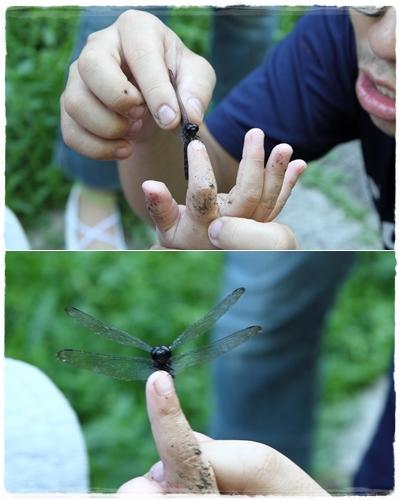 昆蟲夏令營 (36)