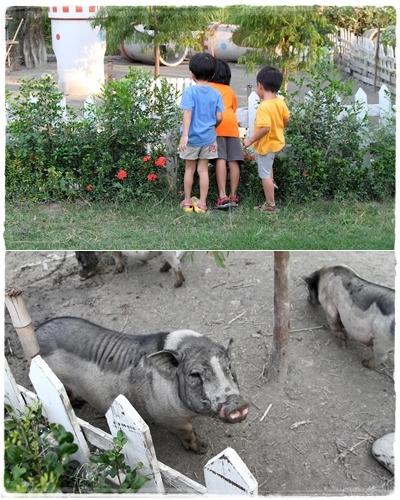 沐卉農場 (45)