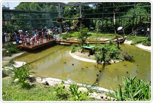 森林鳥花園 (34).JPG