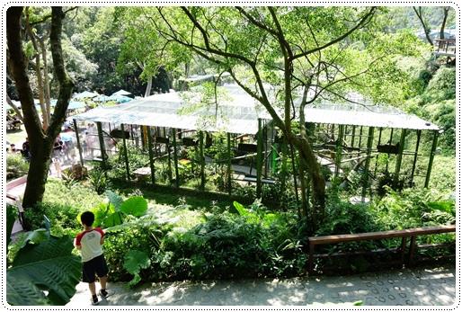森林鳥花園 (47).JPG