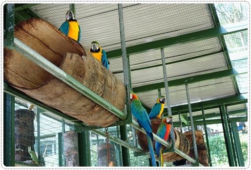 森林鳥花園 (48).JPG