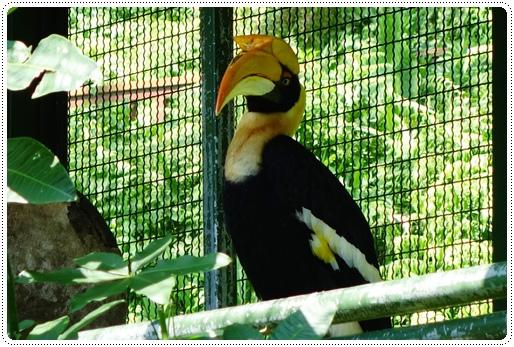 森林鳥花園 (49).JPG
