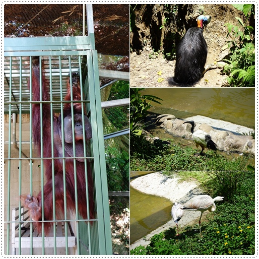 森林鳥花園 (55).jpg