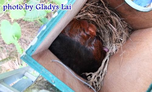 飛鼠在睡覺
