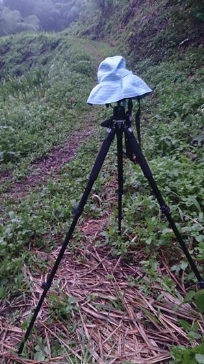 拍攝螢火蟲 (1).JPG