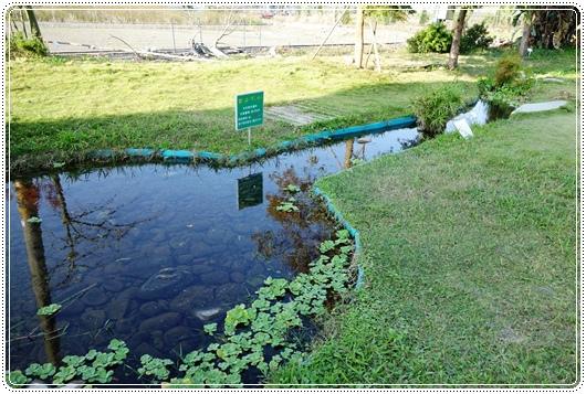 沙發後花園 (11).JPG