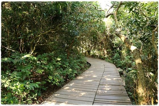 壽山登山步道 (6).JPG