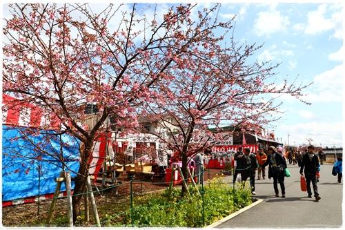 0218河津櫻花祭 (10).JPG