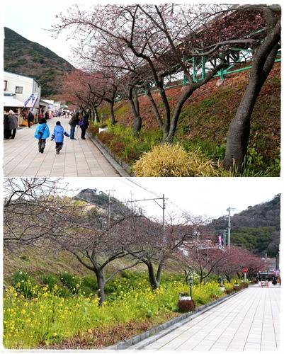 0218河津櫻花祭 (11).jpg
