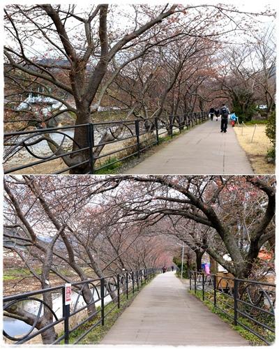 0218河津櫻花祭 (14).jpg