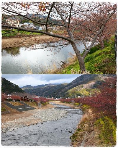 0218河津櫻花祭 (15).jpg