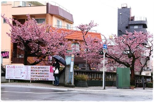糸川櫻花祭 (7).JPG