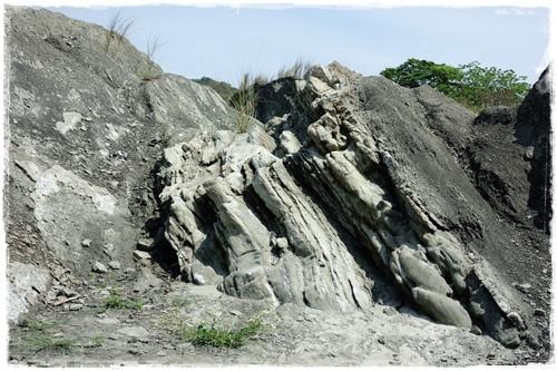 化石營 (9).JPG