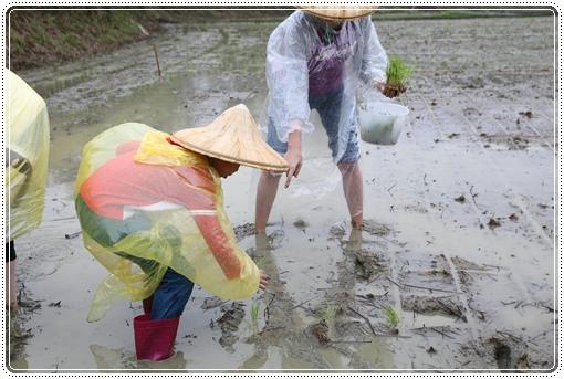 石虎米插秧 (13).JPG