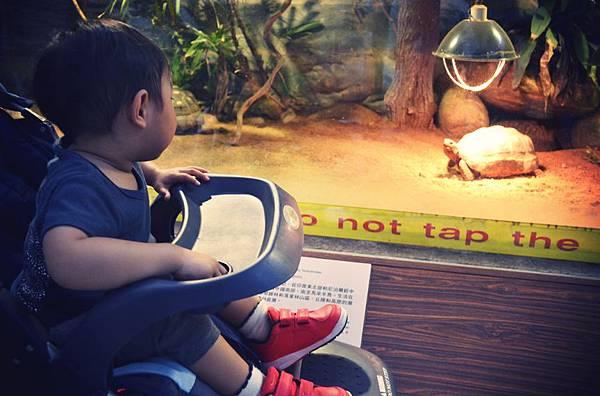 動物園 392.JPG_effected
