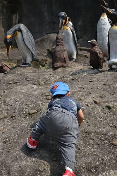 動物園 488