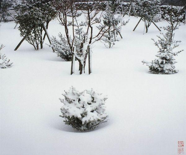 作品《瑞雪狂降濟州島》.jpg