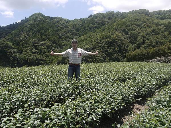 農糧類白青長03