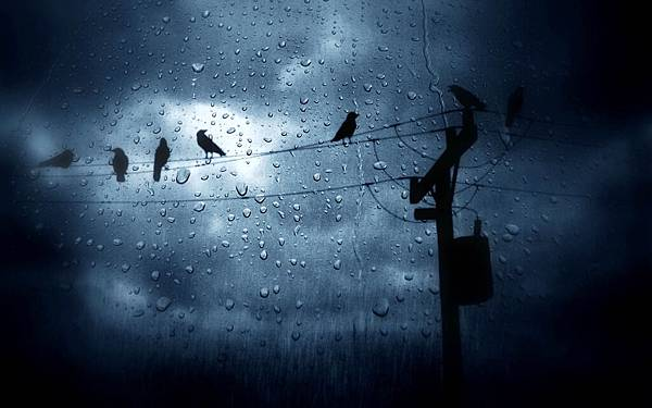 The-Birds-In-The-Rain