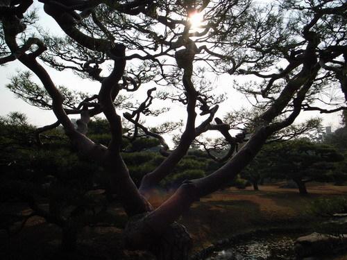 很美的栗林公園