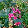 沿途豔麗的小花兒