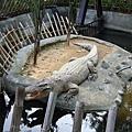 「真的」鱷魚 不是SONY牌電動鱷XD