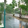 雨中即景-2