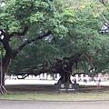 著名的榕園