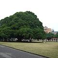 國泰人壽的大樹