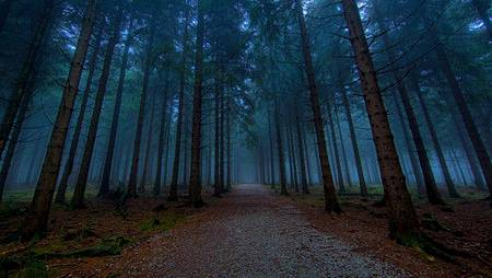 Darkforest-night-view.jpg