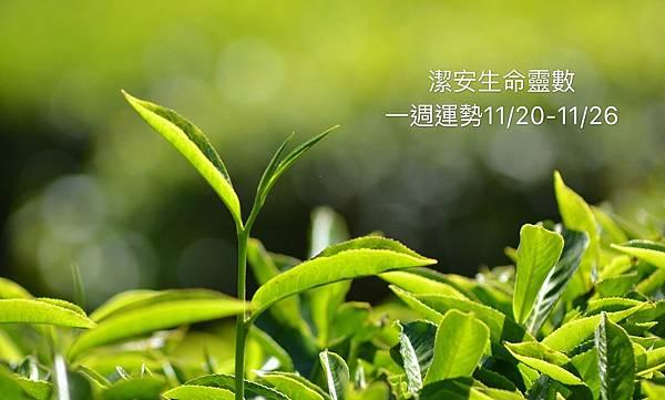 S__5439910.jpg