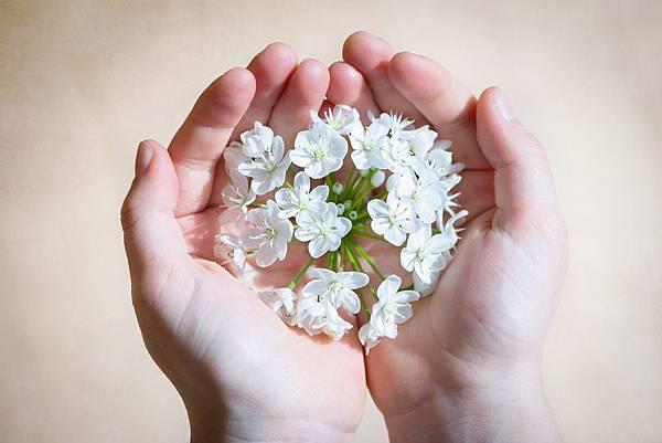 flower-1307578_1920.jpg