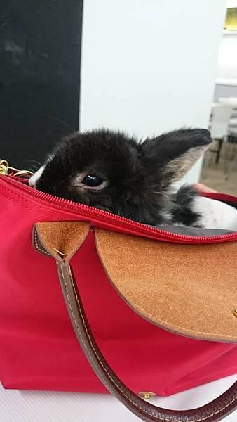 兔兔-01