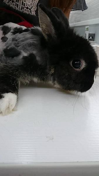 兔兔-02