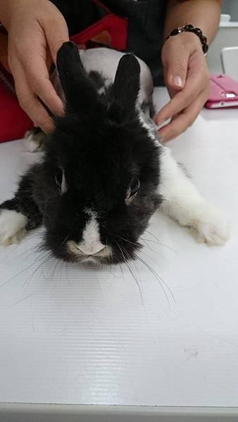 兔兔-03