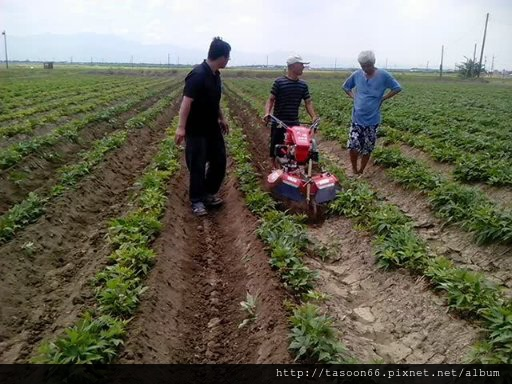 20140702 台南後壁 番薯園培土036