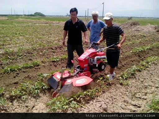 20140702 台南後壁 番薯園培土032
