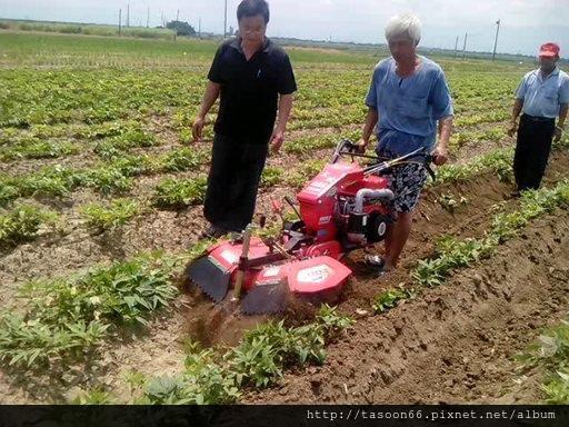 20140702 台南後壁 番薯園培土025