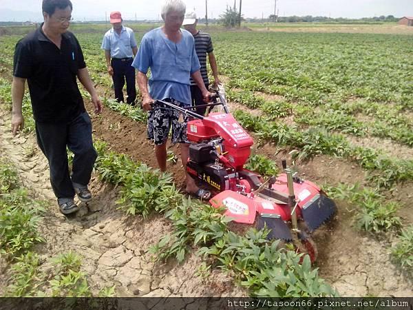 20140702 台南後壁 番薯園培土017