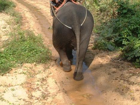 大象穿丁字褲